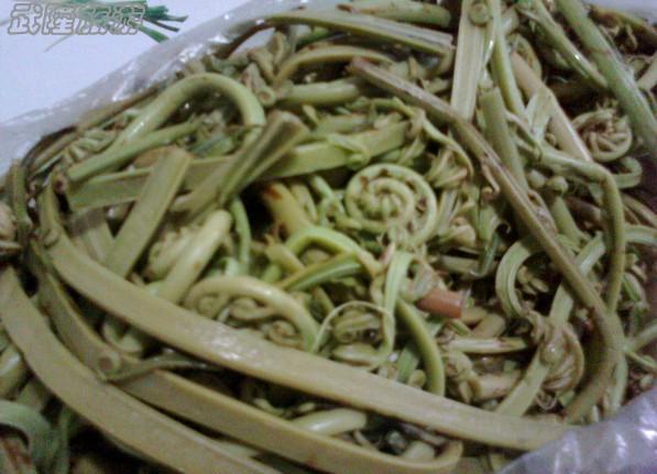 白马山蕨菜