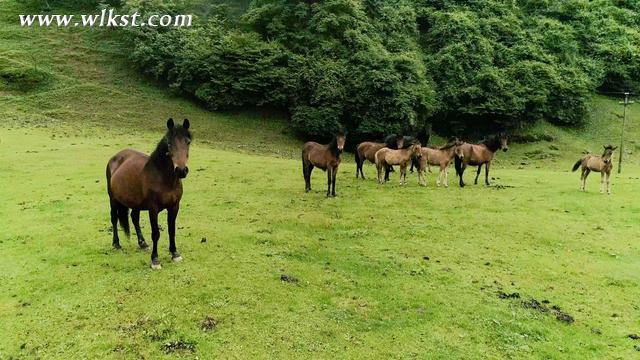 鸟瞰重庆武隆仙女山国家森林公园